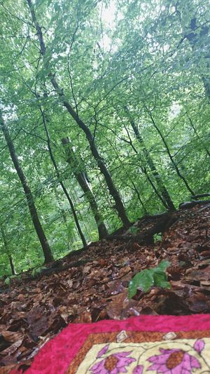 Tree Low Angle View Tree Trunk Forest Green Color Outdoors Beauty In Nature Salah Prayer