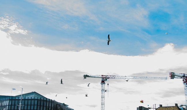 Building Crane City Life Flying Birds Nature Sky Urban Landscape