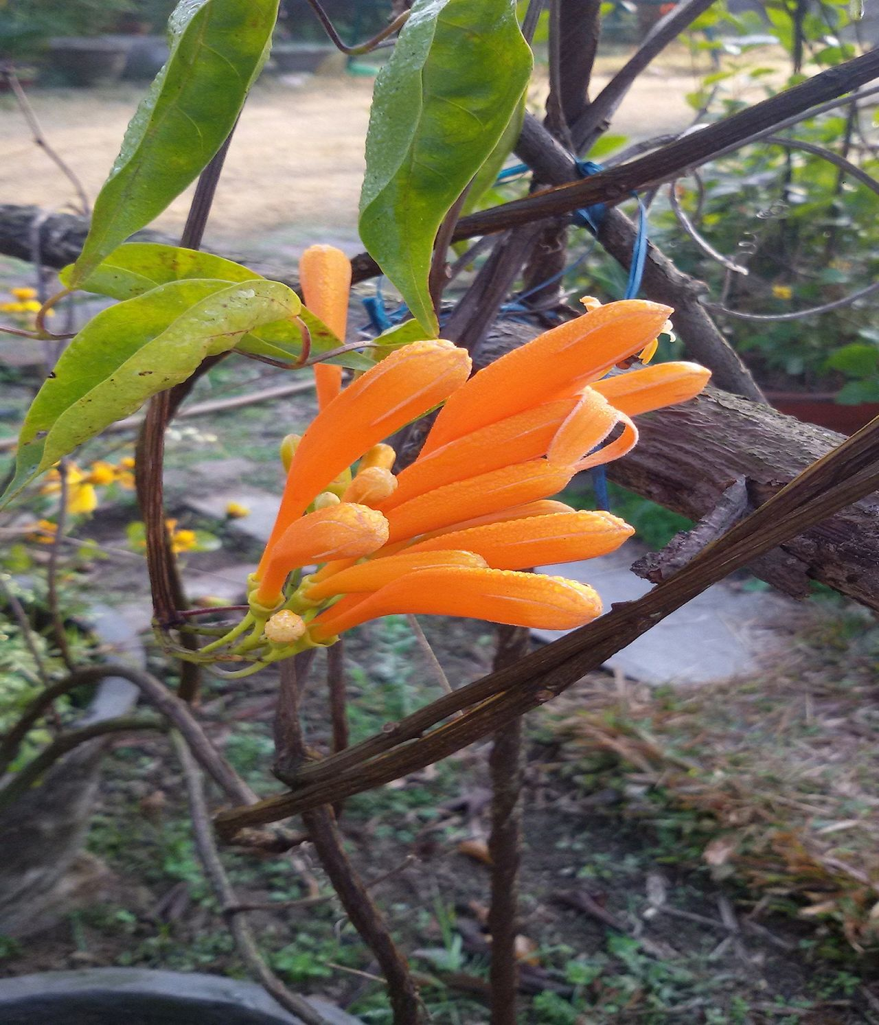 Budding Flower Bunch Of Flowers Flower Flower Beauty Flowers And Dew Dro Nature Orange Flowers Winter Flowers