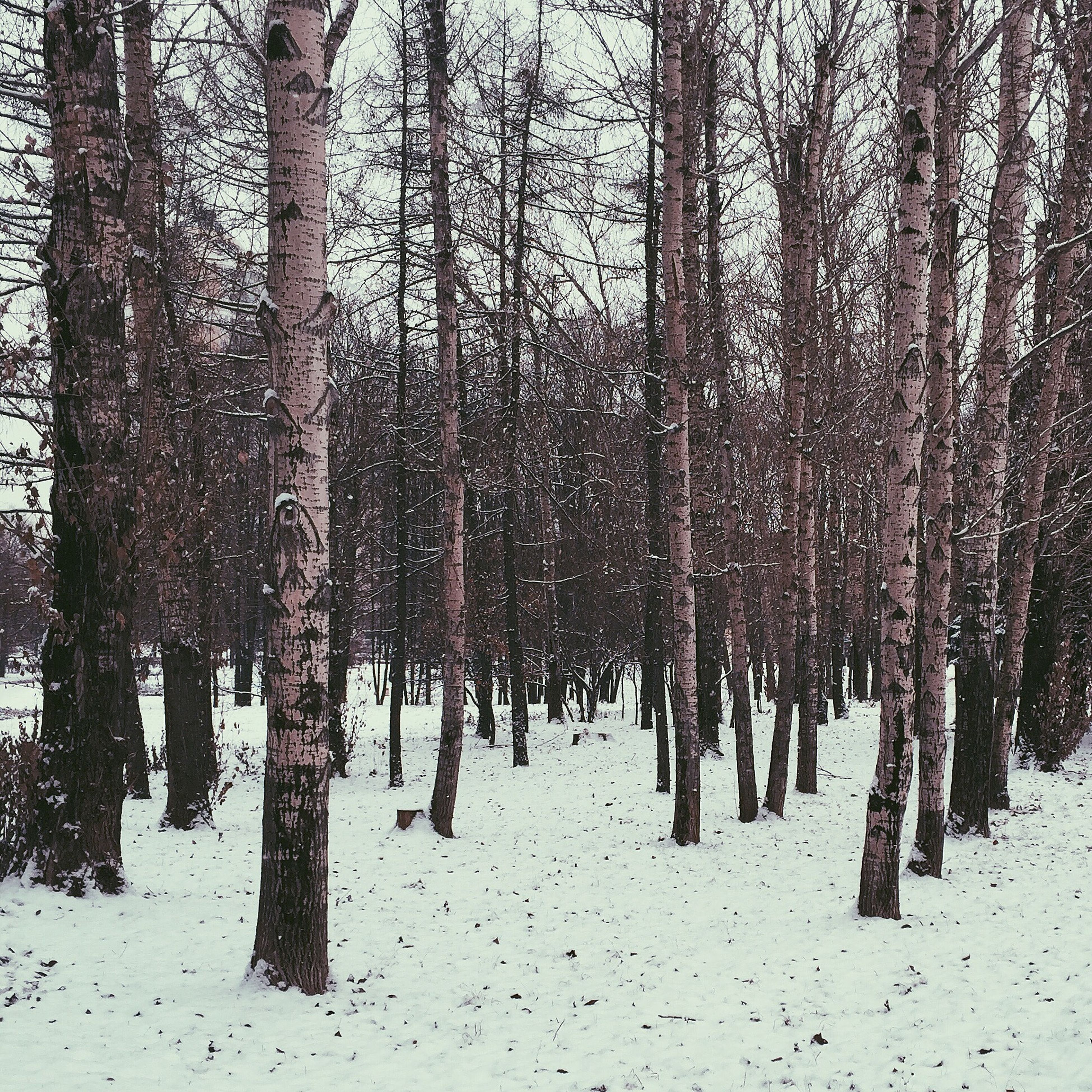 winter, snow, cold temperature, tree, season, tree trunk, tranquility, weather, tranquil scene, nature, woodland, forest, covering, beauty in nature, landscape, bare tree, scenics, branch, frozen, non-urban scene