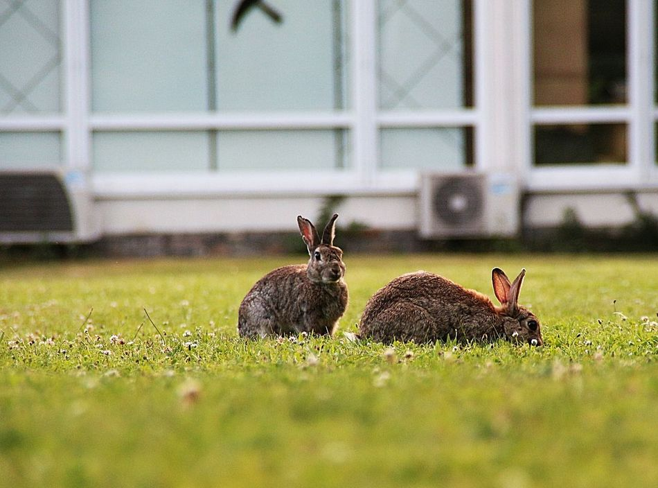 Beautiful stock photos of rabbit, Animal Themes, Close-up, Day, Eating