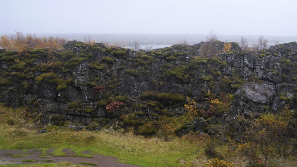 Beauty In Nature Brush Bushes Day Green Growth Nature No People Outdoors Plant Rocks Scenics Sky Thingvellir Thingvellir National Park þingvellir Þingvellir National Park