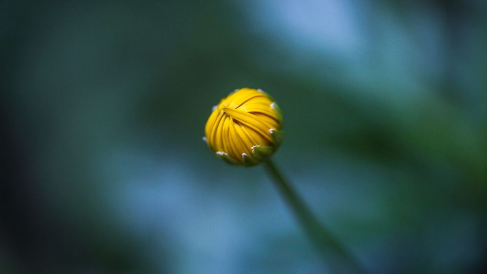 Beautiful stock photos of macro, Bud, Day, Flower, Focus On Foreground
