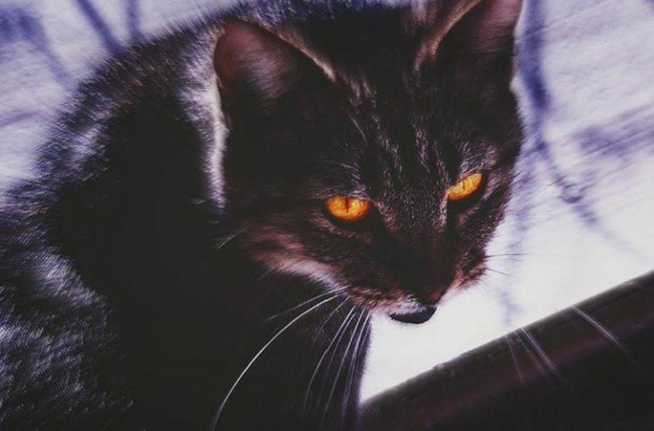 Cat♡ Ilovecat Mycat EyeEm Photography Blakc Animal Nice Pic No People Goodphoto