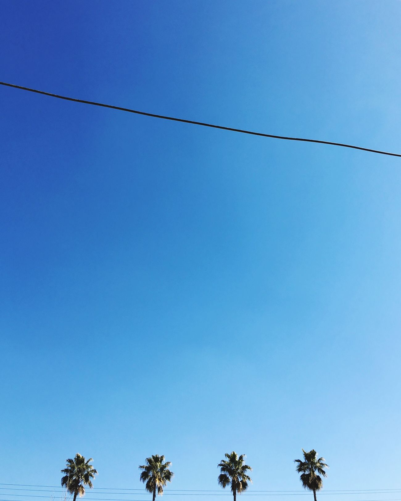 Minimalism Blue Low Angle View No People Clear Sky Cable Nature Sky Electricity  Power Line  Day Outdoors Power Supply Tree