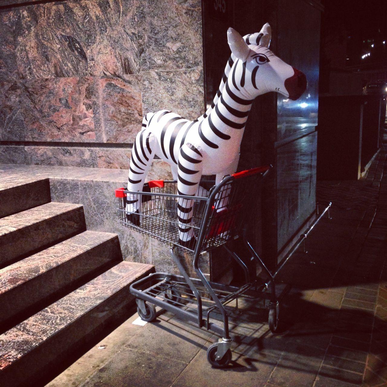 Beautiful stock photos of zebra, Animal, Buying, Cart, Center