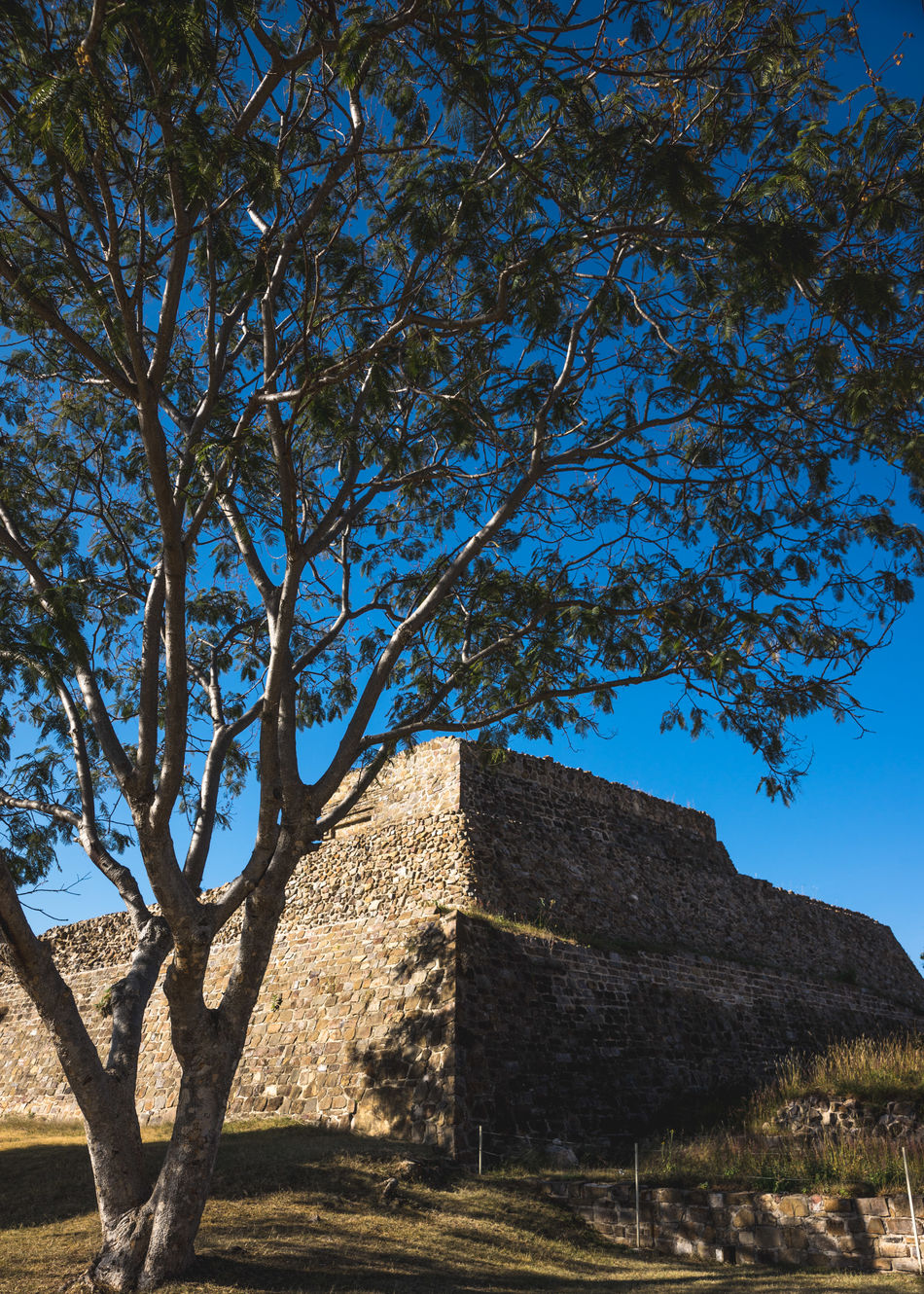 Ancient Ancient Architecture Ancient Civilization Ancient Ruins Archeology Architecture Architecture Art Blue Cosmos Culture Day History Landscape_photography Mexico Mexico_maravilloso Monte Alban Nature Nature No People Outdoors Prehispanic Pyramid Sky Tree