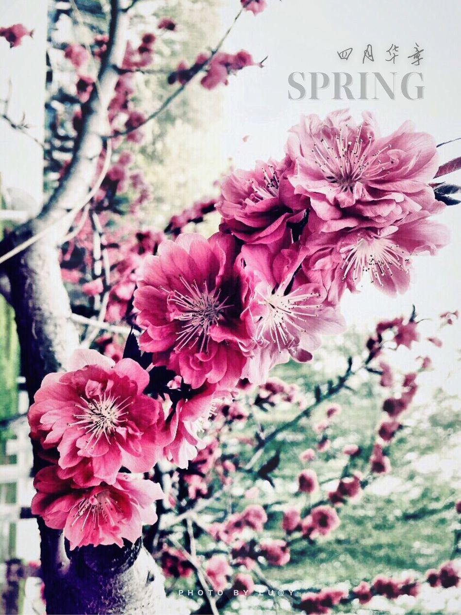 Picking Flowers  Planting spring Enjoying The Sun Starting A Trip Spring 城市 穿行 Fresh Air Enjoying Life Hello World Enjoying The View Relaxing Taking Photos By IPhone