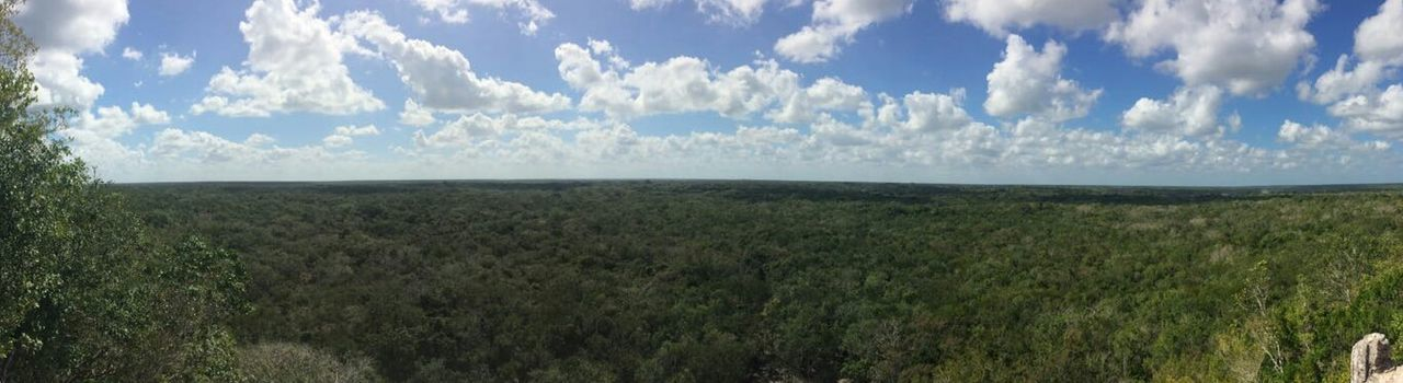 Coba Coba Selva Jungle Sky Landscape Landscape_Collection Yucatan Mexico Beauty In Nature Scenics Outdoors Nature Cloud - Sky Day Panoramic Panoramic View Panoramic Landscape Sky_collection