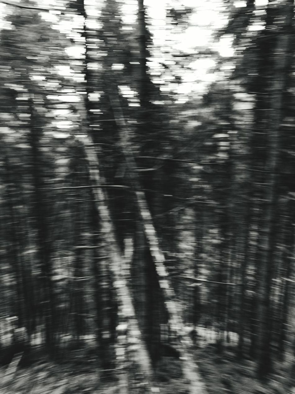 Nature Grey No People Traveling TreePorn Tree Krimmler Wasserfalle Taking Photos Enjoying Life Krimmler Tauerntal Krimmler Krimml Wasserfal Krimmlerwasserfälle Krimml Krimml Waterfalls Österreich Check This Out Non-urban Scene Fog Day Majestic Outdoors Tree Trunk WoodLand Nature