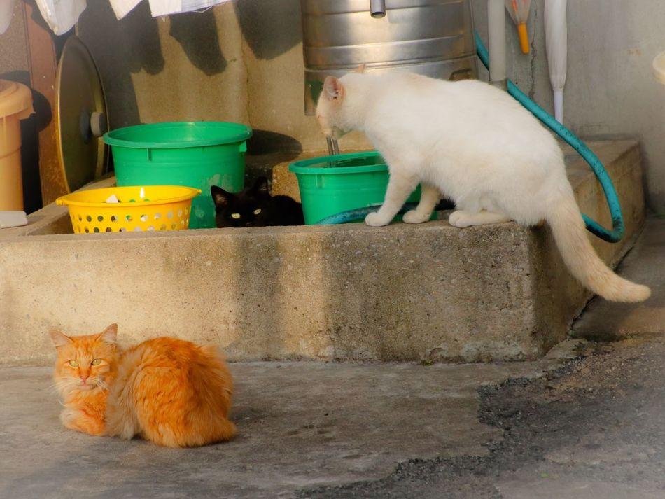 Cat 猫 Stray Cat Cat♡ 野良猫 Animal Playing With The Animals Eyeem Best Shots - Animals Photography Cat Lovers Pets Corner 白猫 黒猫Love 茶トラ猫