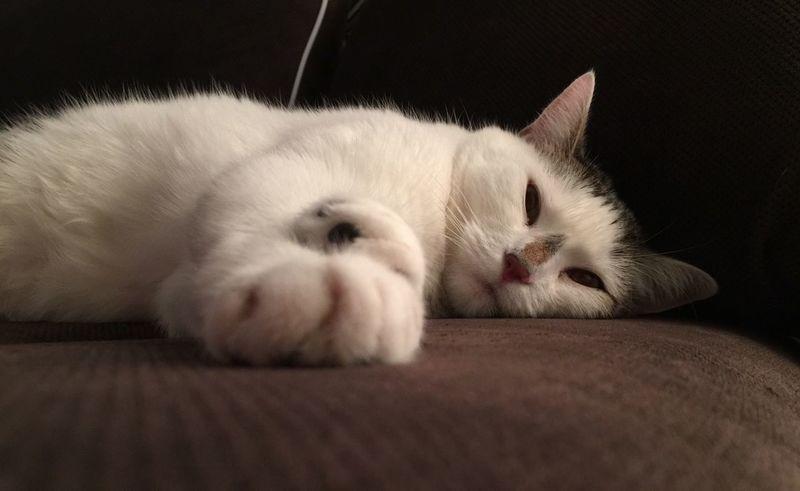 Cats Cat Lovers Cats Of EyeEm Animal Themes Cat♡ Pet Portraits