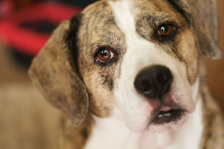 When you see yourself in your dogs eyes! PuppyLove Dog Closeupshot Those Eyes In Love