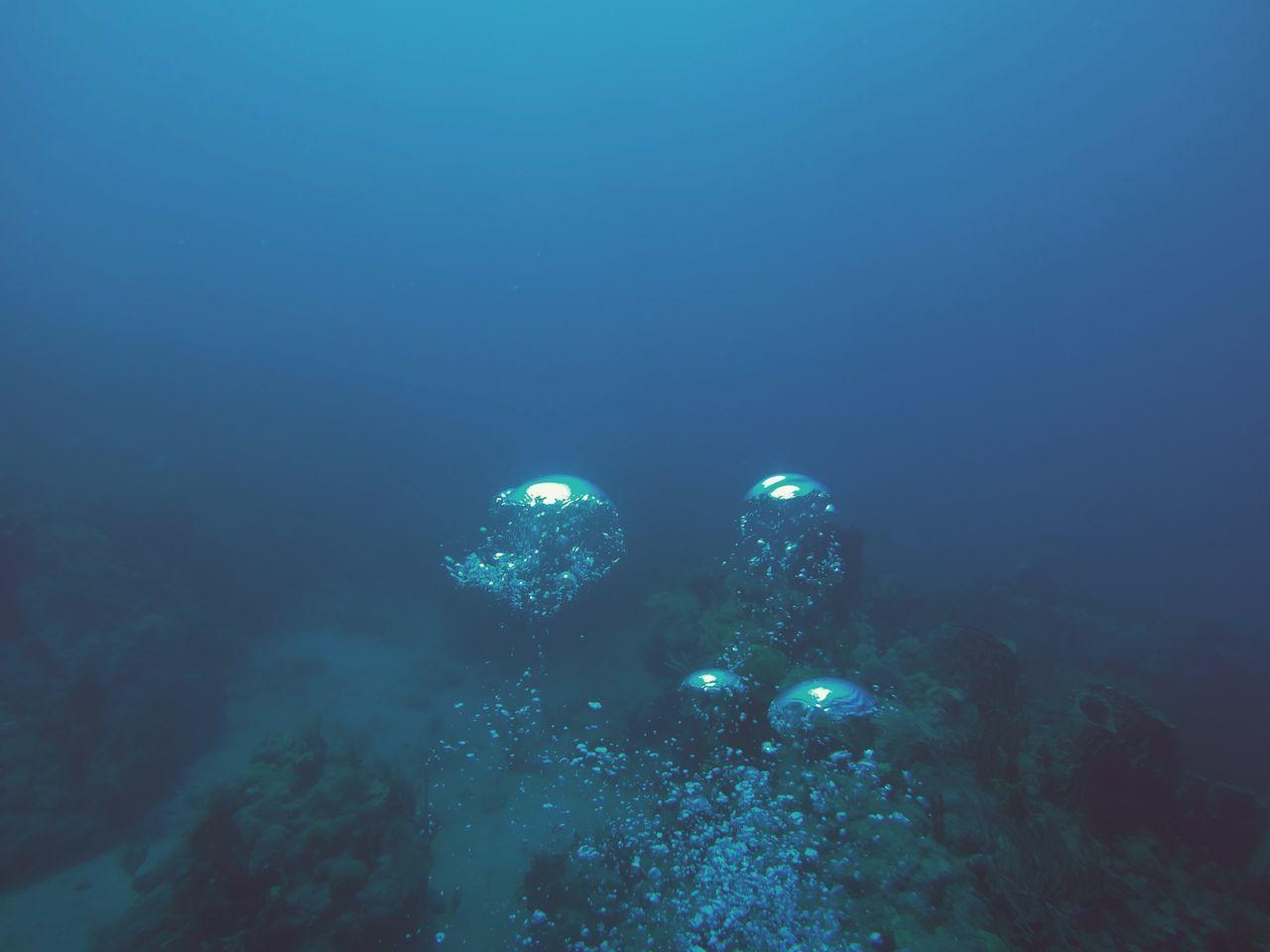 Scuba in Saba EyeEmNewHere Underwater UnderSea Scuba Diving Water Nature Exploration Blue Saba The Great Outdoors - 2017 EyeEm Awards