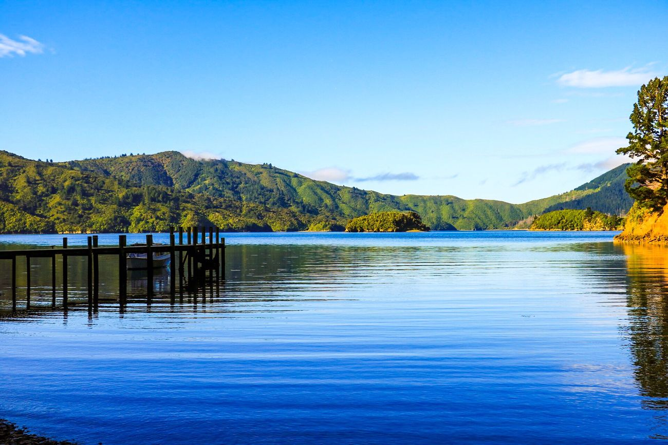 Scenics Beauty In Nature Nature Tranquil Scene Water Tranquility Tree Clear Sky Sky Sea Outdoors Water Reflections Holiday Trip Getaway  Reflection Summer Holidays Jetty Landscape Sea And Sky New Zealand