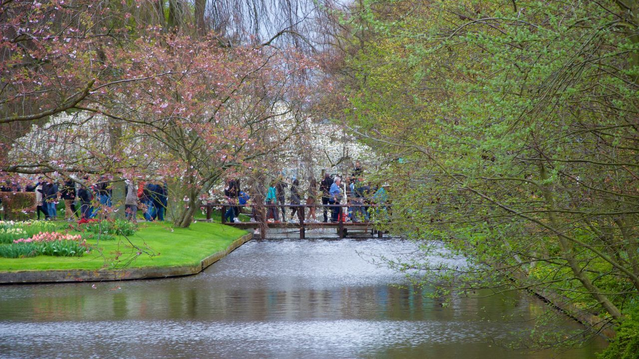 Keukenhof Spring Amsterdam Eye Em Nature Lover Nature Photography Landscape_photography EyeEm Best Edits EyeEm Best Shots EyeEm Gallery EyeEmBestPics Eye4photography  Eye Em A Traveller Travel Traveling People