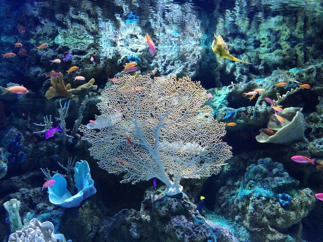 Taking Photos Hello World Enjoying Life Pivotal Ideas Backgrounds Water Oceanlife Ocean Shootermag Underwater Aquarium Sea Life Beauty In Nature Colour Of Life Exceptional Photographs EyeEm Nature Lover From My Point Of View Fish Underwater Photography Underwater World Underwater Life