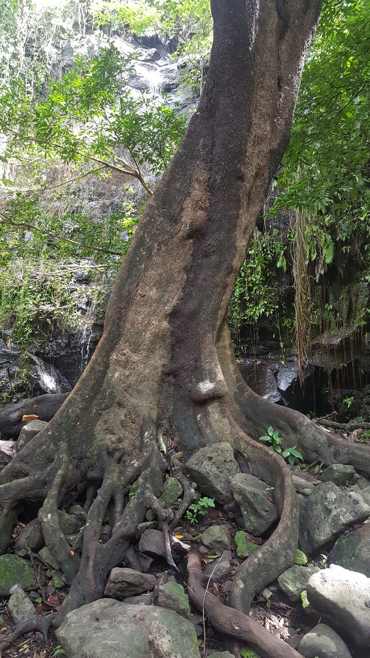 tree, tree trunk, nature, forest, no people, day, outdoors, growth, tranquility, branch, beauty in nature, scenics, landscape