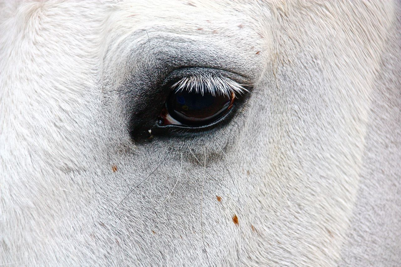 Cropped Image Of Horse