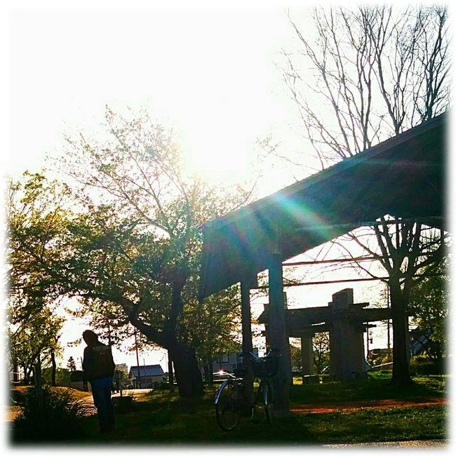 夕暮れ時の散歩🎶☺🎶Walk at dusk 夕暮れ時 Dusk 散歩