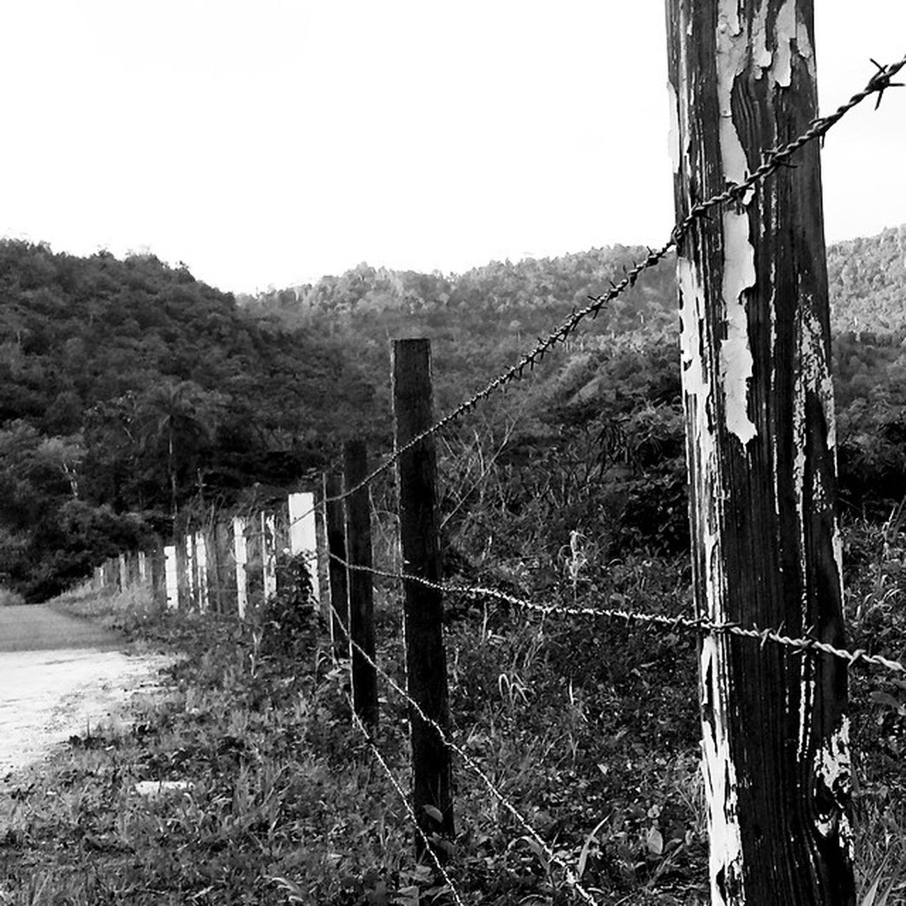 Wu_caribbean Weatindies_bnw Grenada Wirefence Grenvillevale Blancoynegro Noir Nature Ourbestshots