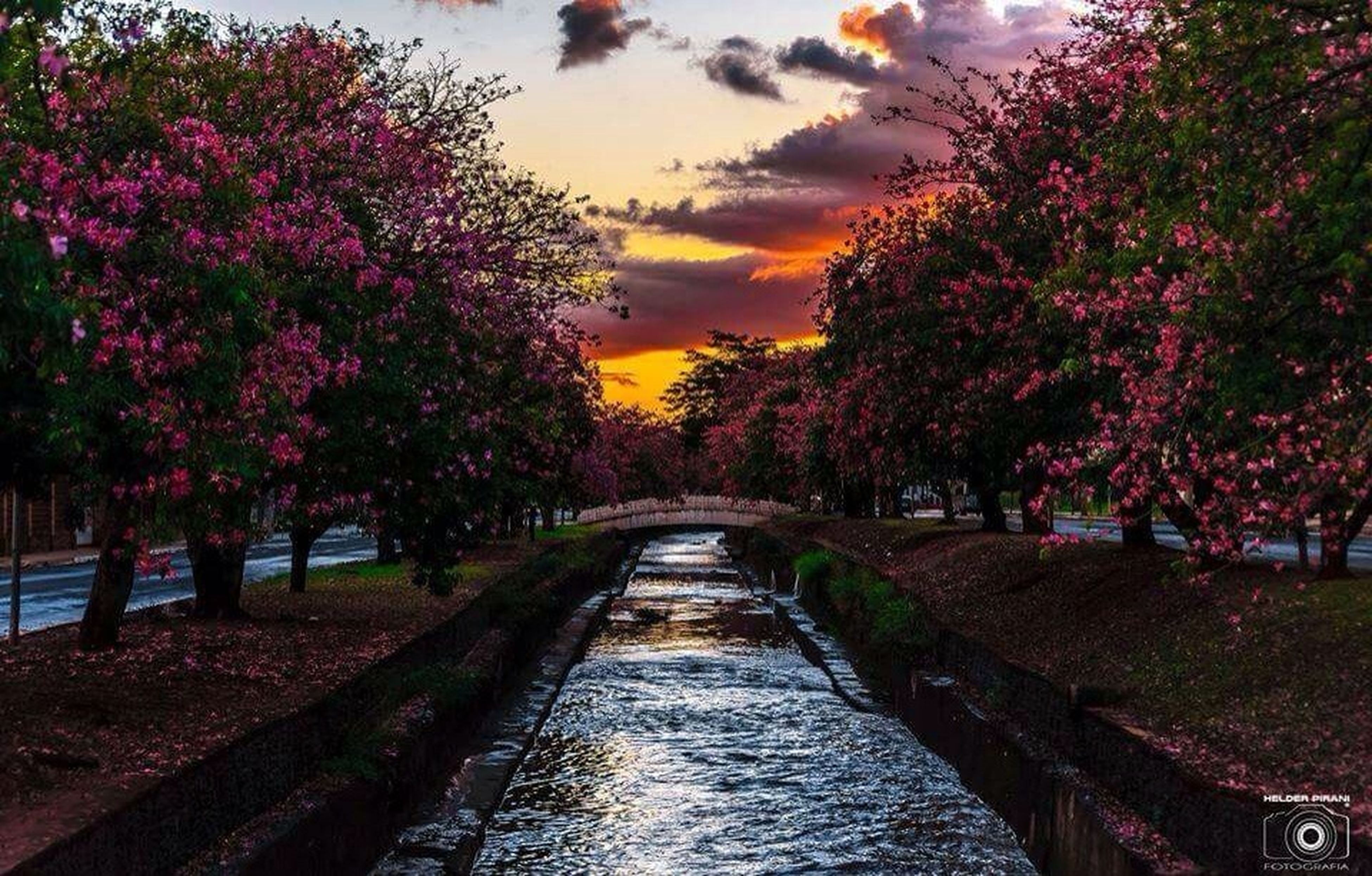 tree, the way forward, water, tranquility, diminishing perspective, beauty in nature, sky, tranquil scene, nature, scenics, canal, vanishing point, river, growth, sunset, autumn, cloud - sky, waterfront, transportation, no people
