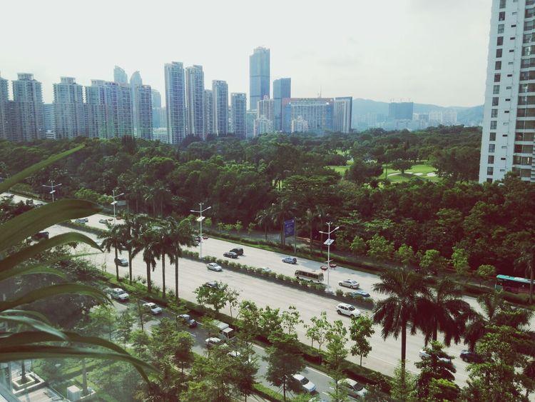 Shenzhen Tropics City View  Green