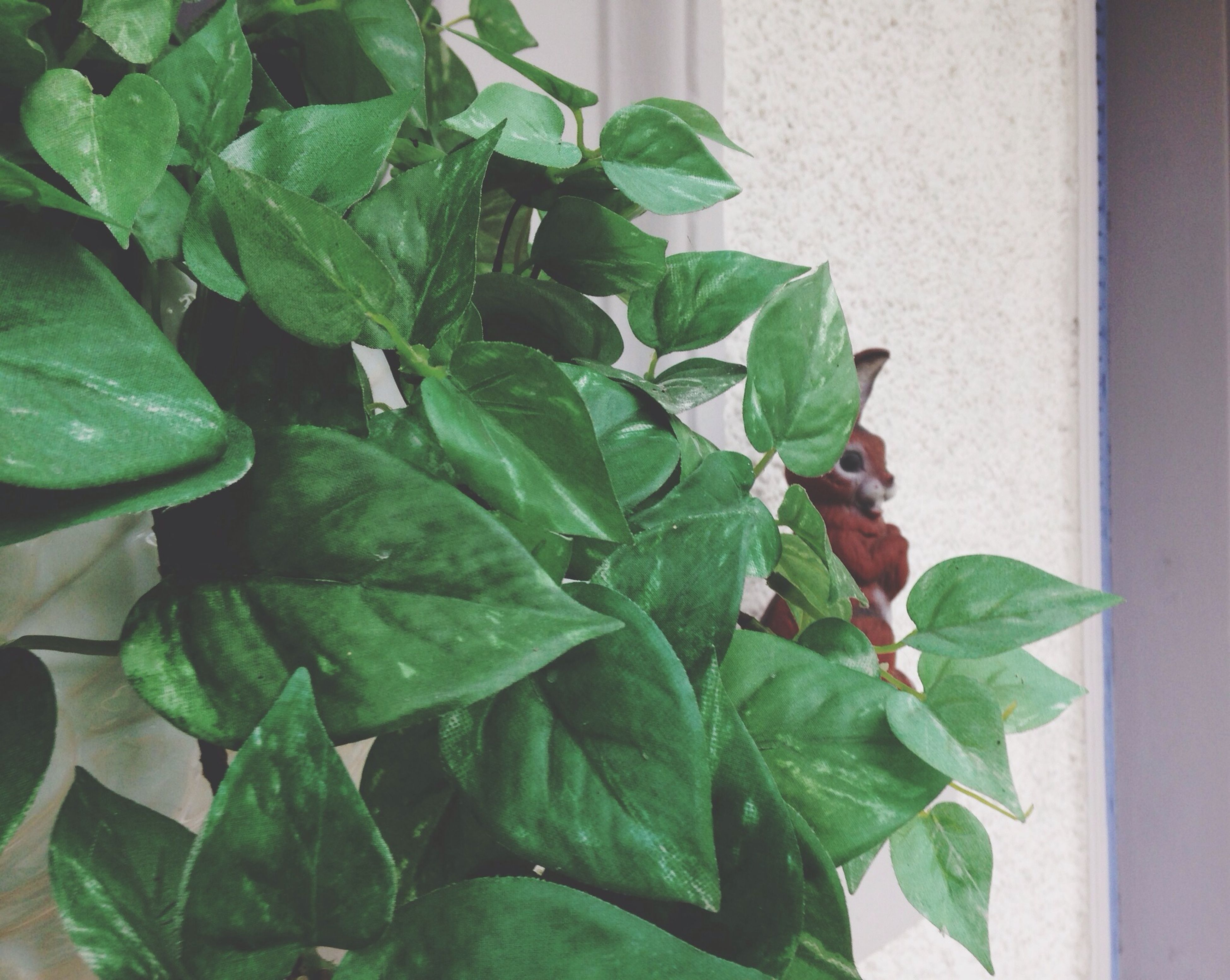 leaf, green color, plant, growth, potted plant, close-up, wall - building feature, green, growing, nature, leaf vein, ivy, built structure, leaves, day, no people, creeper plant, architecture, freshness, wall