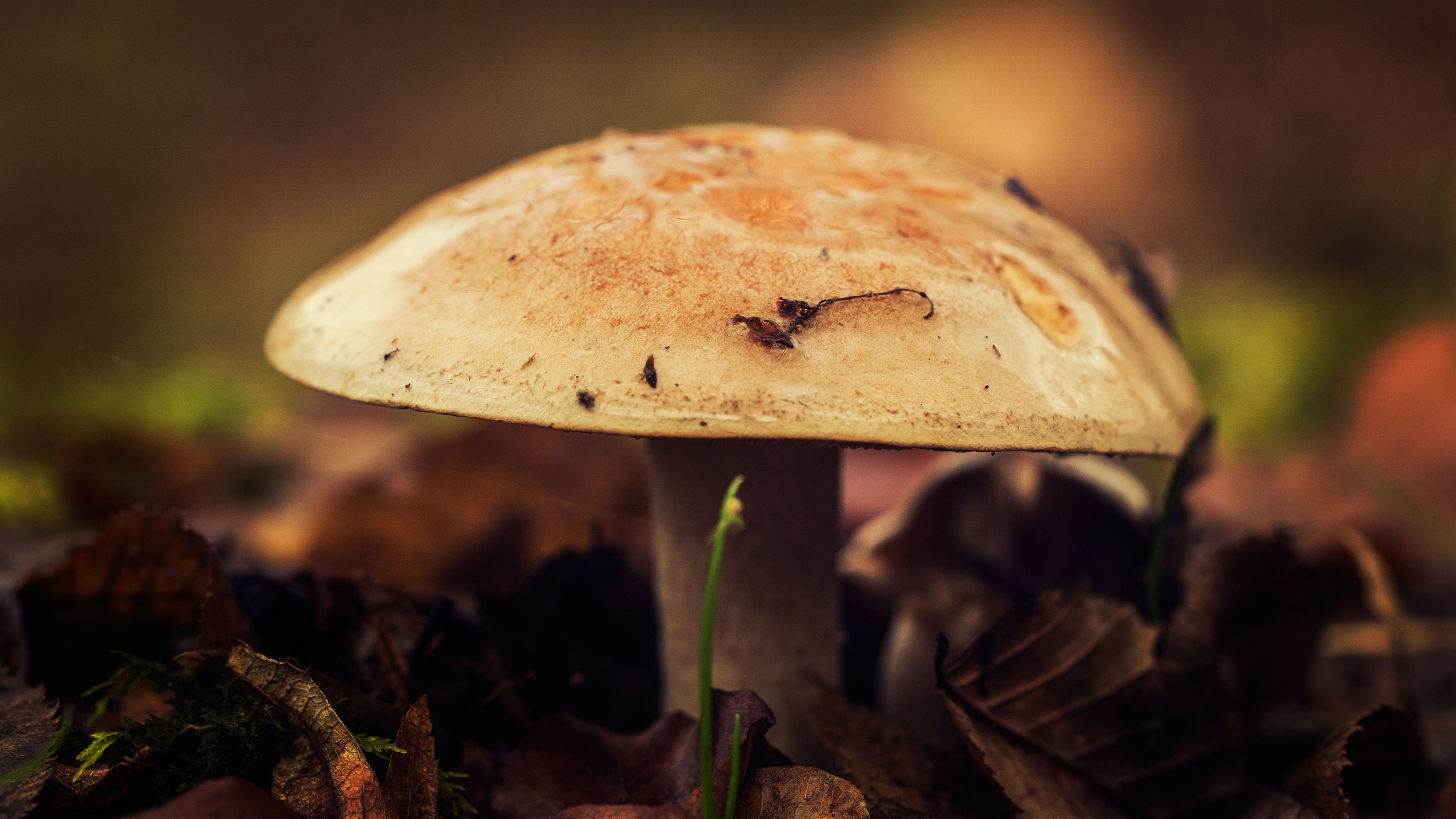 animal themes, nature, animals in the wild, insect, close-up, animal wildlife, no people, mushroom, outdoors, day, one animal, beauty in nature