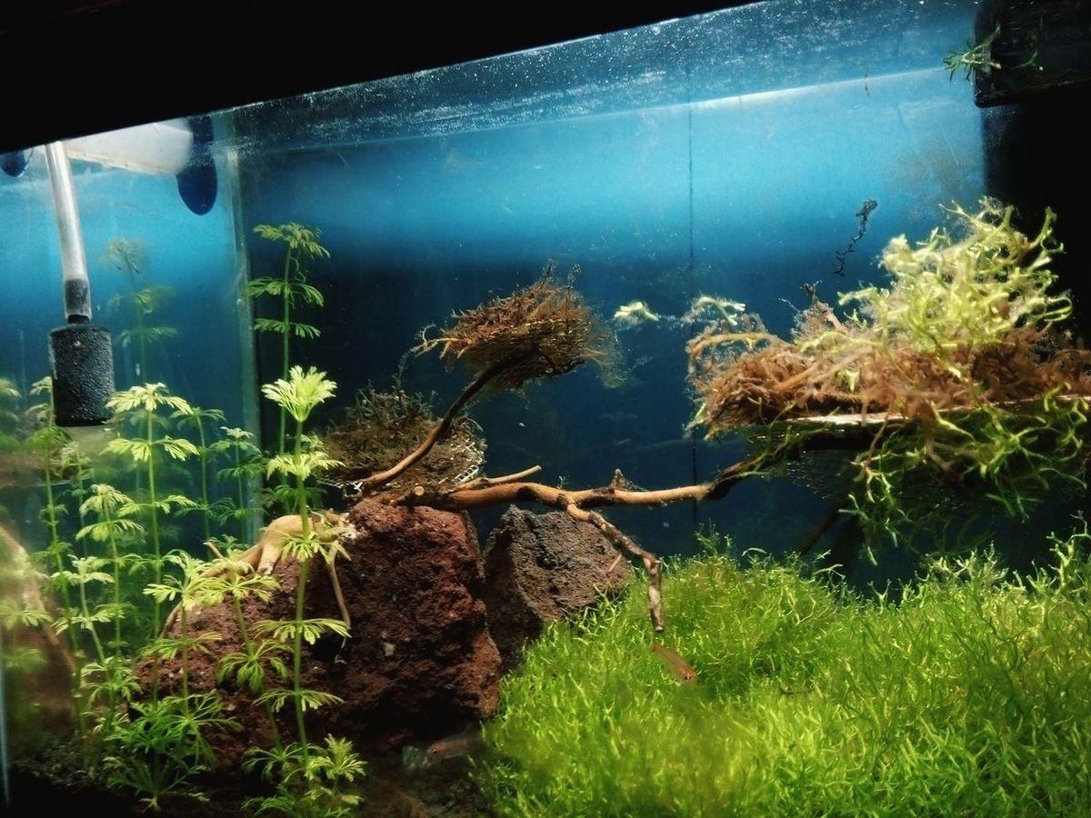 Algae averywhere 😬 Aquascape Nanotank