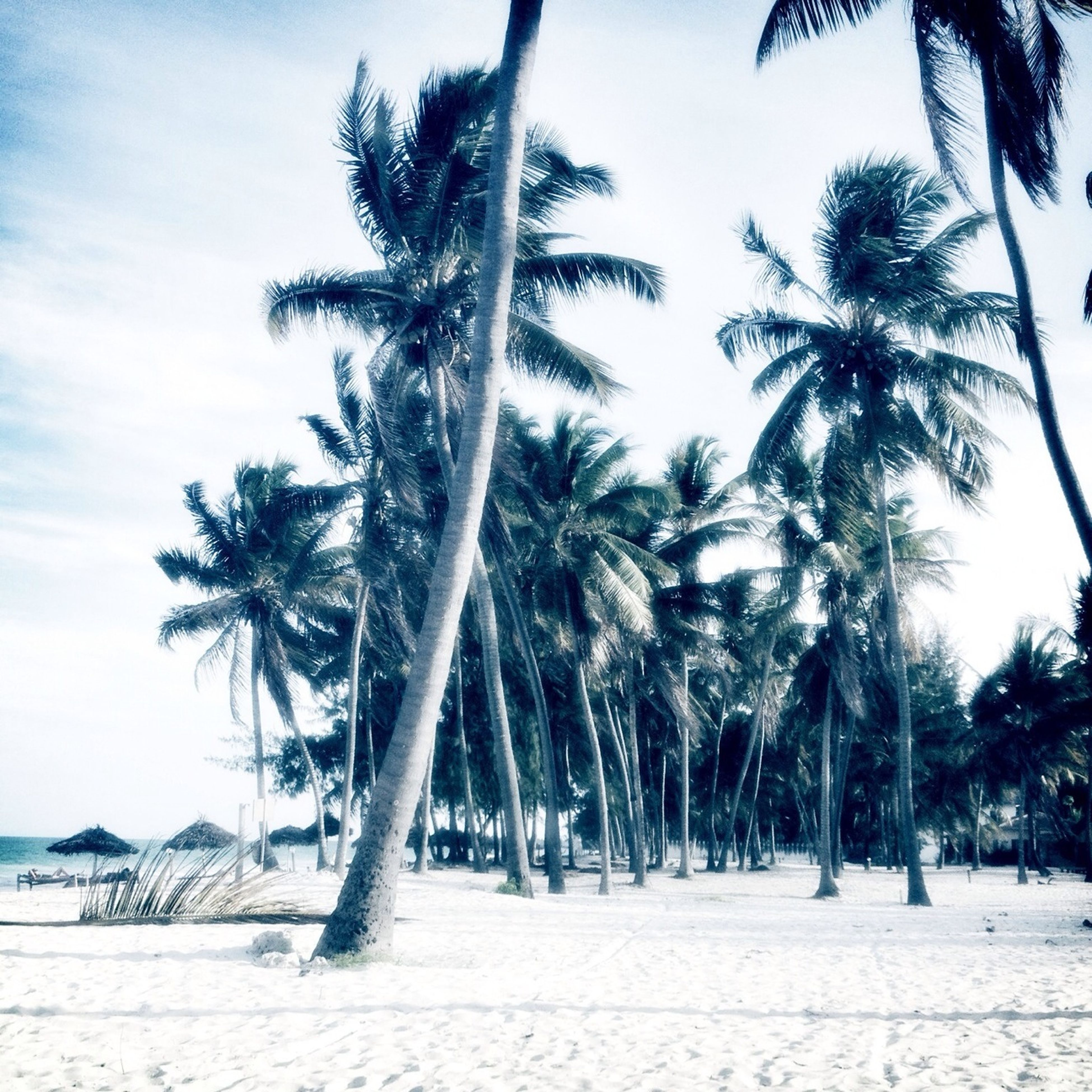 palm tree, tree, tree trunk, tranquility, beach, growth, sky, tranquil scene, coconut palm tree, nature, beauty in nature, scenics, sea, sand, tropical tree, palm leaf, tropical climate, day, tall - high, shore