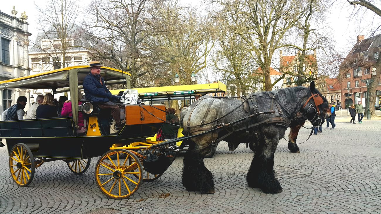 Adult Animal Themes Architecture Belgium Brugge Building Exterior Built Structure Carriage City Day Domestic Animals Horse Horse Cart Horse Photography  Horse Riding Horsedrawn Land Vehicle Mammal Mode Of Transport One Person Outdoors People Transportation Tree Working Animal