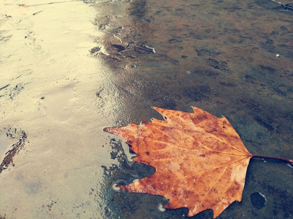 Autumn Leaf Season  Change High Angle View Dry Asphalt Water Reflection Road Maple Leaf Nature Day Outdoors Tranquility Natural Condition No People Fragility