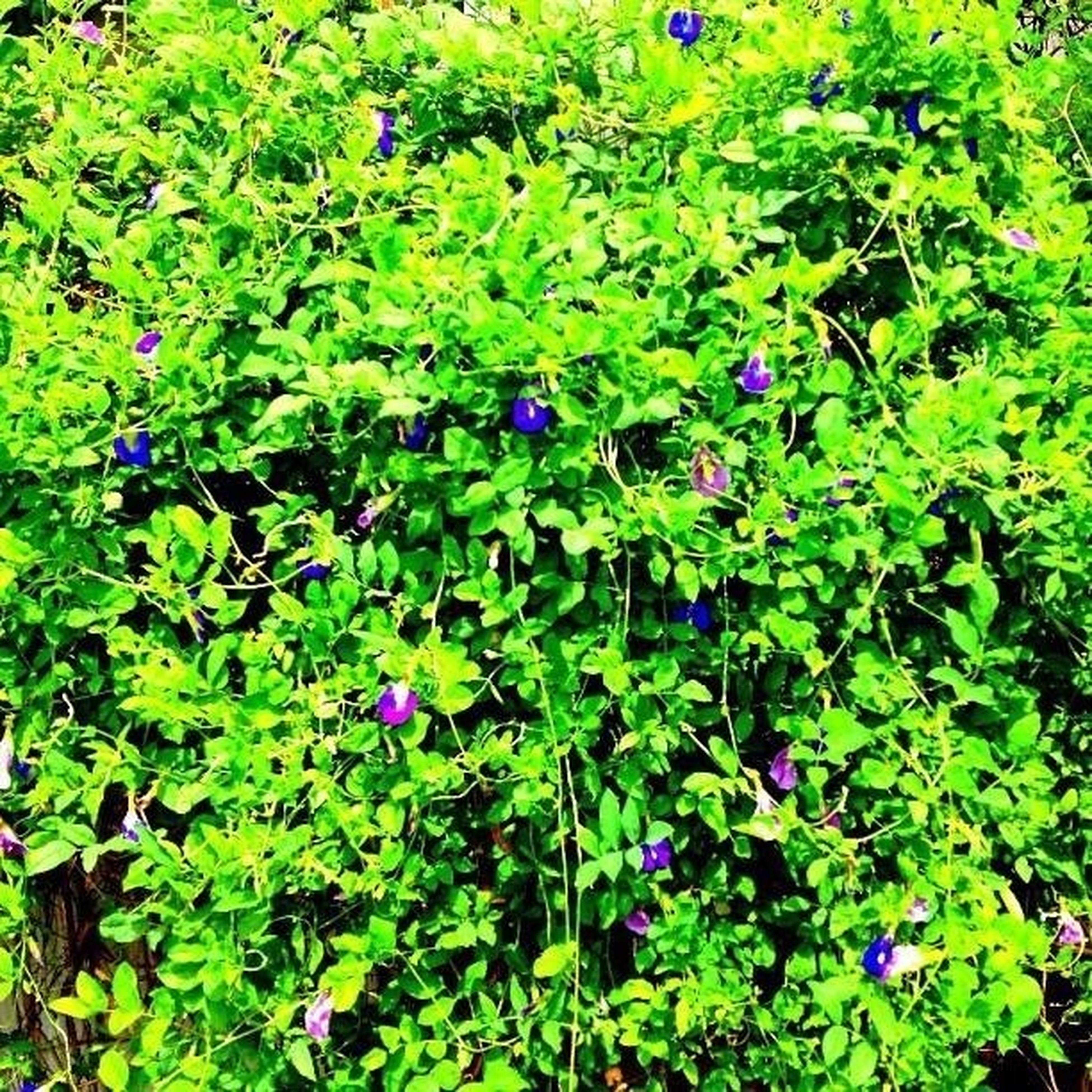 flower, growth, freshness, purple, beauty in nature, leaf, plant, fragility, green color, nature, petal, blooming, in bloom, high angle view, park - man made space, blue, flower head, day, blossom, sunlight