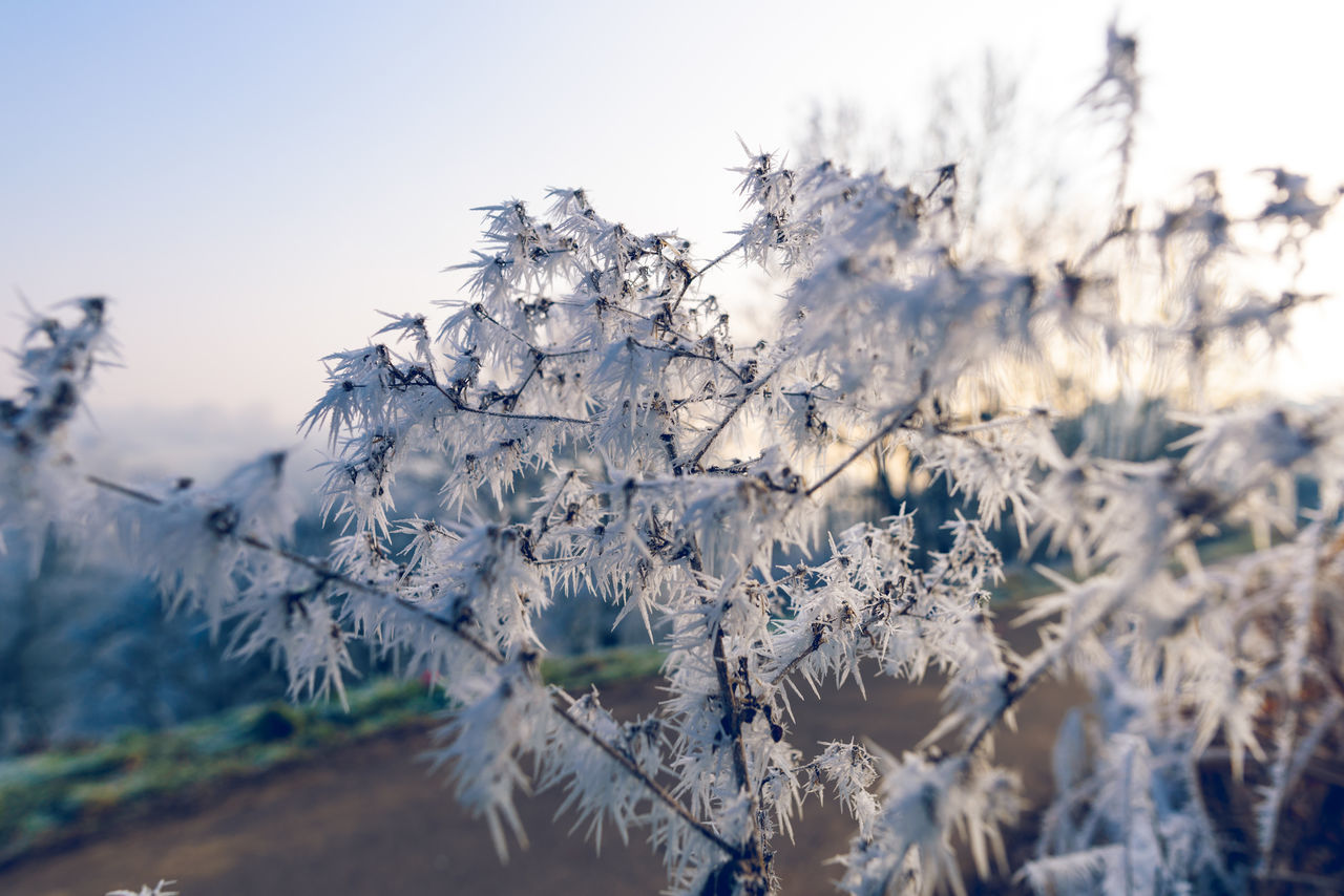Beauty In Nature Branch Close-up Cold Temperature Day Extreme Weather Frost Frosty Frosty Mornings Frozen Frozen Nature Growth Ice Crystals Nature No People Outdoors Plant Scenics Tranquility Tranquility Winter Winter Winter Wonderland Wintertime