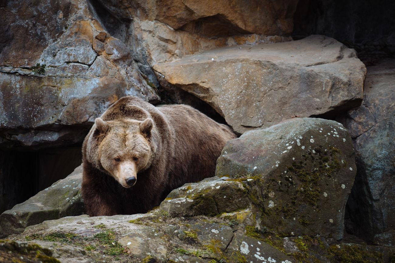 Beautiful stock photos of baer, Animal Head, Animal Themes, Bear, Berlin