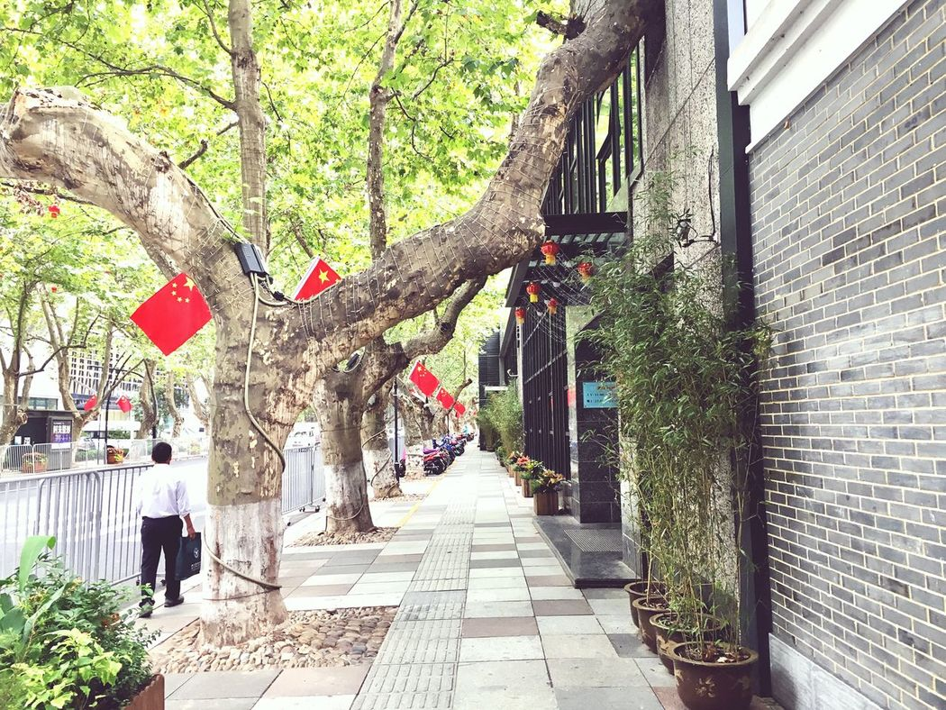 China national celebration! Here! China! Architecture Tree Built Structure Building Exterior Tree Trunk Narrow The Way Forward Plant Growth Footpath Long Branch Day Walkway Outdoors Pedestrian Walkway Green Color Diminishing Perspective