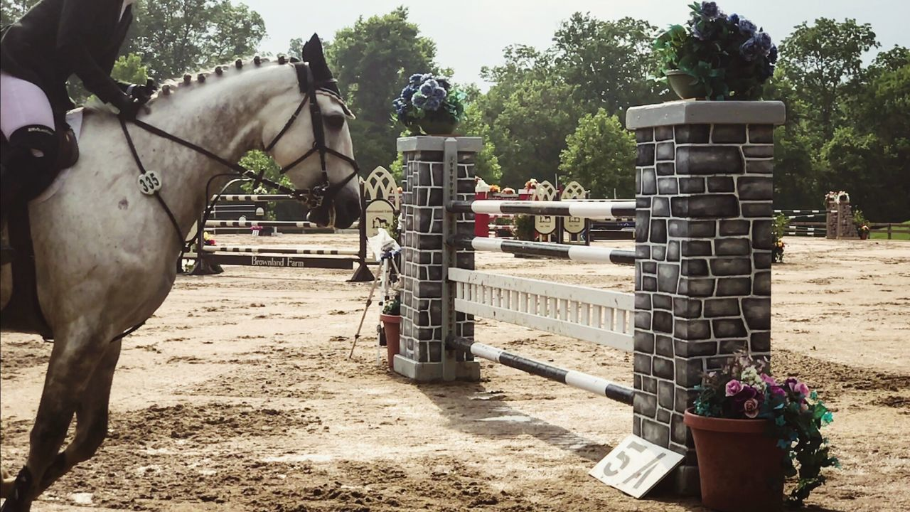 Grand Prix  Jumping Equestrian Horse Show Horse Riding Horse Photography  Horse Life Animal Themes Competitive Sport Riding Sport Competition Horse Horseback Riding Equestrian Life Equestrianphotography Equestrianlife Eques