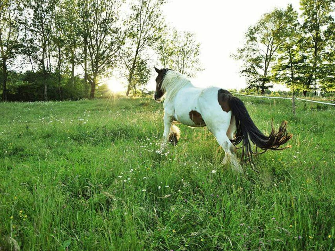 Galopp to the Sun . Horse Ilovehorses Horselover My Passion Freedom Free Wildlife Wild is good for me