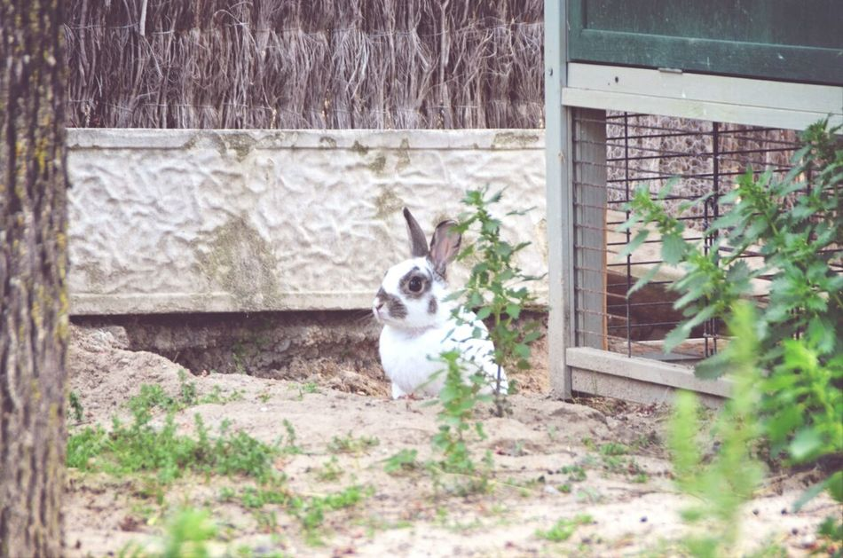Beautiful stock photos of rabbit, Animal Themes, Day, Domestic Animals, Focus On Background