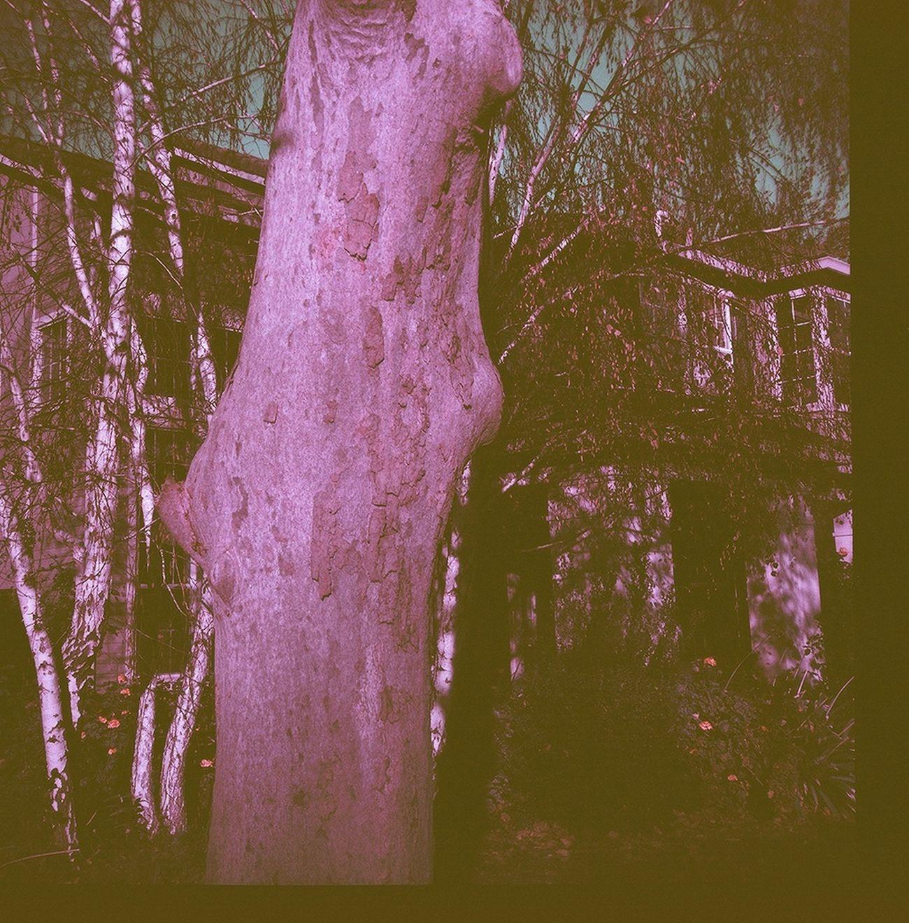 Glass Lens Lomochrome Purple Diana F+ House