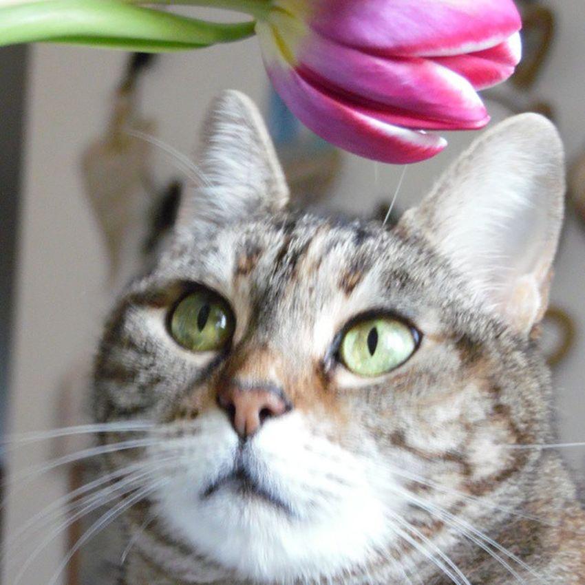 Kikka affascinata dai fiori 😊 buona domenica a tutti 😃 Kikka Cat Occhioniverdi ItsSunday IlBuonGiornoSiVedeDalMattino Vitadagatto Animals Amorepeloso I ❤ Cat