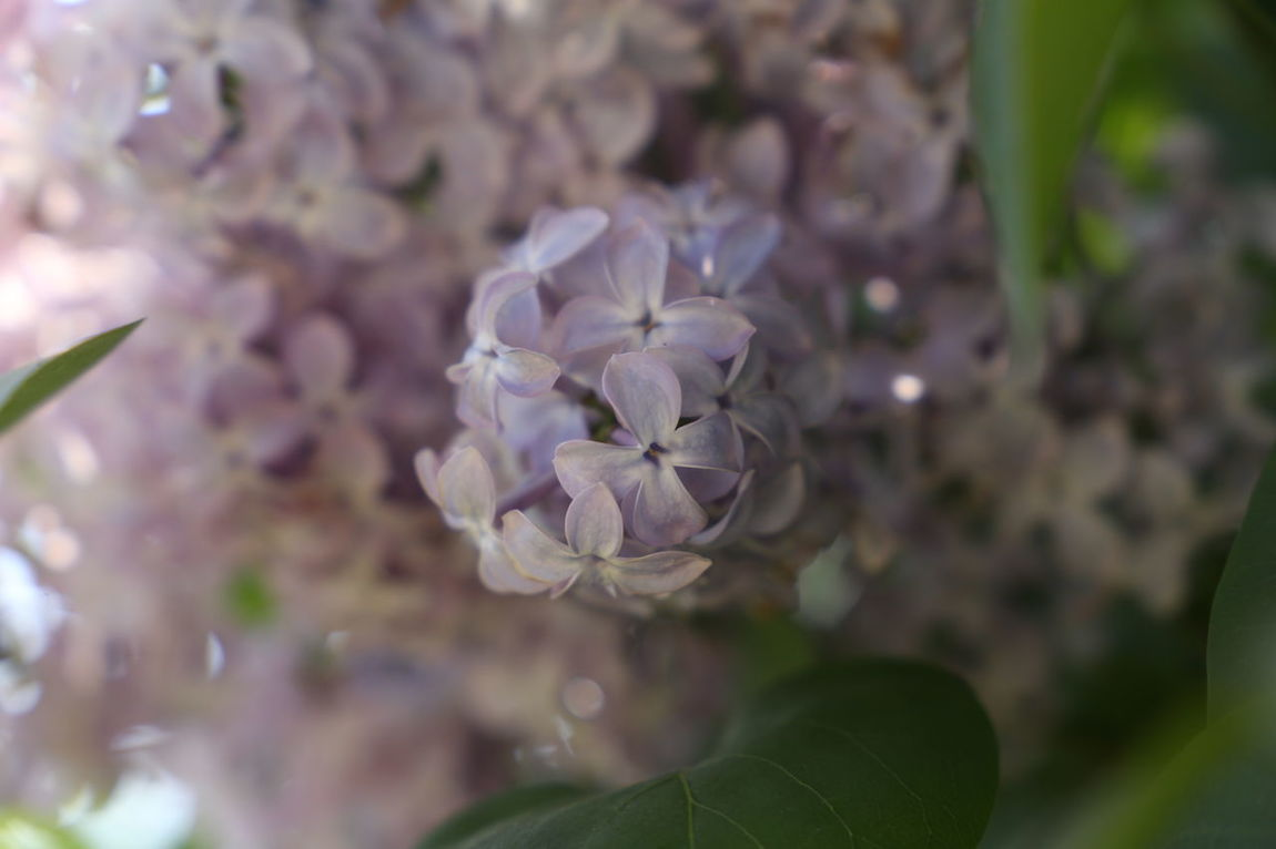 Beauty In Nature Blooming Close-up Day Flower Flower Head Fragility Freshness Growth Nature No People Orgona Orgonite Outdoors Petal Plant