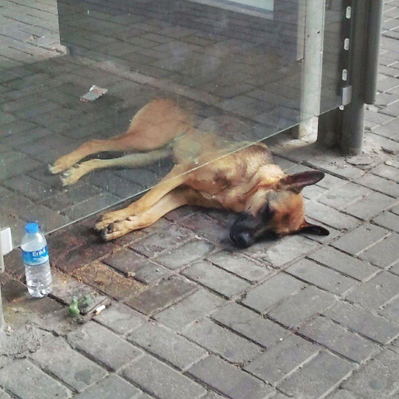 Izmir Bornova Susamis Dog sokak köpek yazık