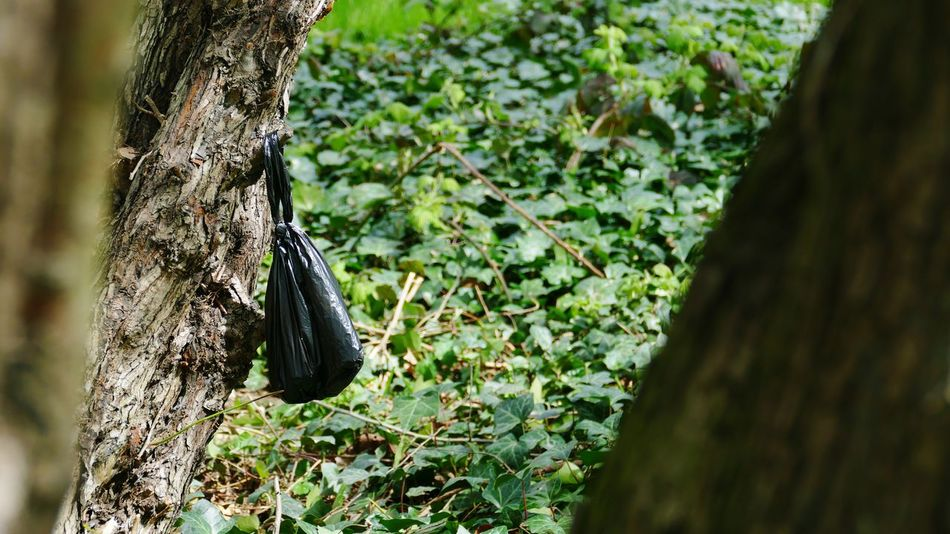 'Repulsive' Poo Dog Poop Dog Poo Dog Poo Bags Heath Hampstead Heath Nature Litter Waste London Lifestyle --B