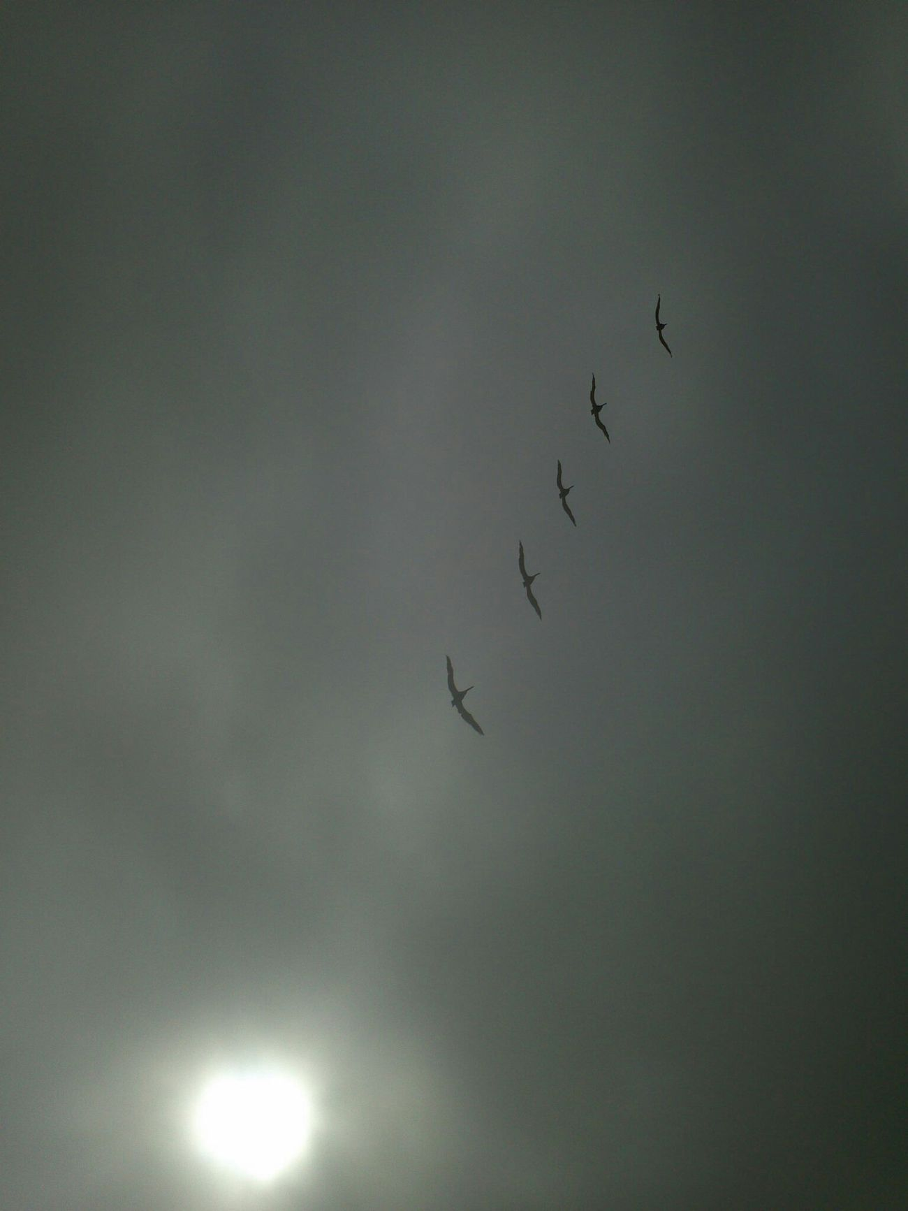 Icarus Sky Blind Shot Into The Sun Birds