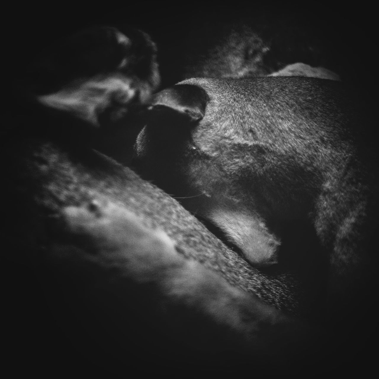mammal, animal themes, one animal, domestic animals, no people, pets, dog, sleeping, relaxation, indoors, animals in the wild, night, close-up