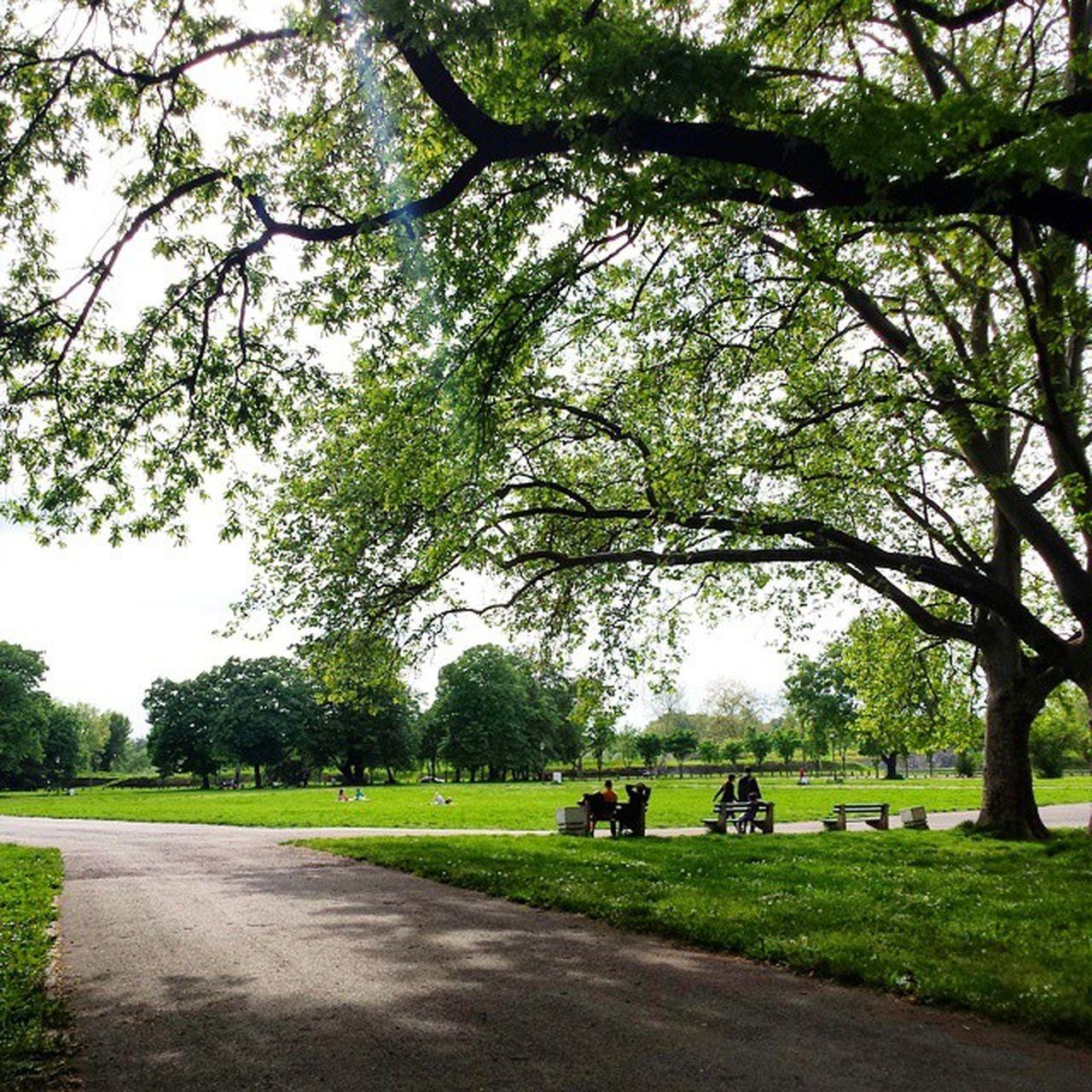 Belgrade Park Kalemegdan  Ig_bgd Ig_belgrade Jun2015