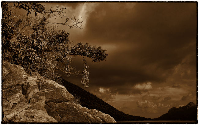 Atmospheric Mood Beauty In Nature Black And White Blackandwhite Blackandwhite Photography Branch Cloud - Sky Cloudy Coniferous Tree Island Low Angle View Mountain Mountain Range Nature Outdoors Remote Scenics Sky Solitude Storm Cloud Tranquil Scene Tranquility Tree Vietnam Travel Vietnam Trip