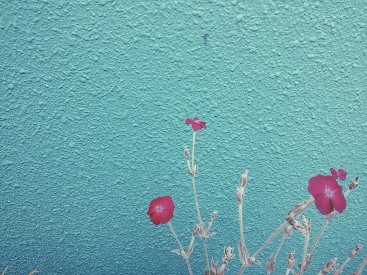 Beautiful stock photos of wall, Blue, Close-Up, Copy Space, Day